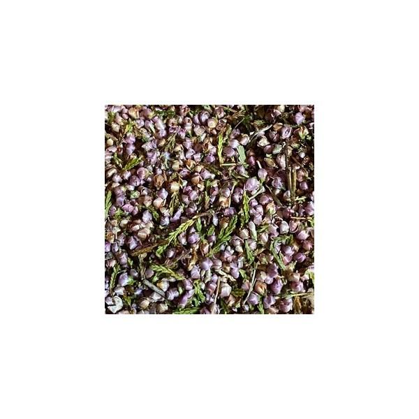 Fleurs de bruyère