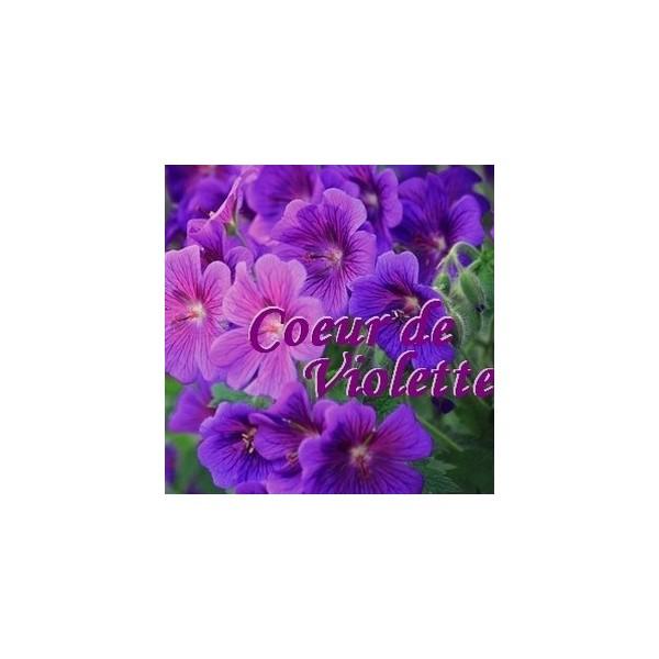Cœur de Violette